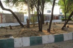 شهرداری در ارتباط با قطع درختان پارک 100 دستگاه پاسخ بدهد؟ +تصاویر